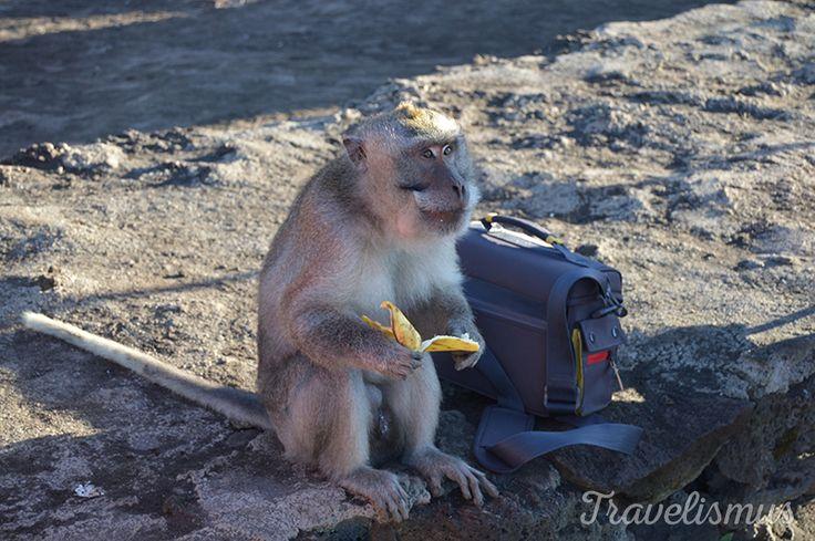 Monkeys love bananas and cameras, Bali
