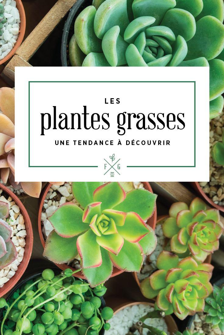 Les plantes grasses (Succulents) ; une tendance à découvrir! Disponible à la Ferme Grover, Laval.