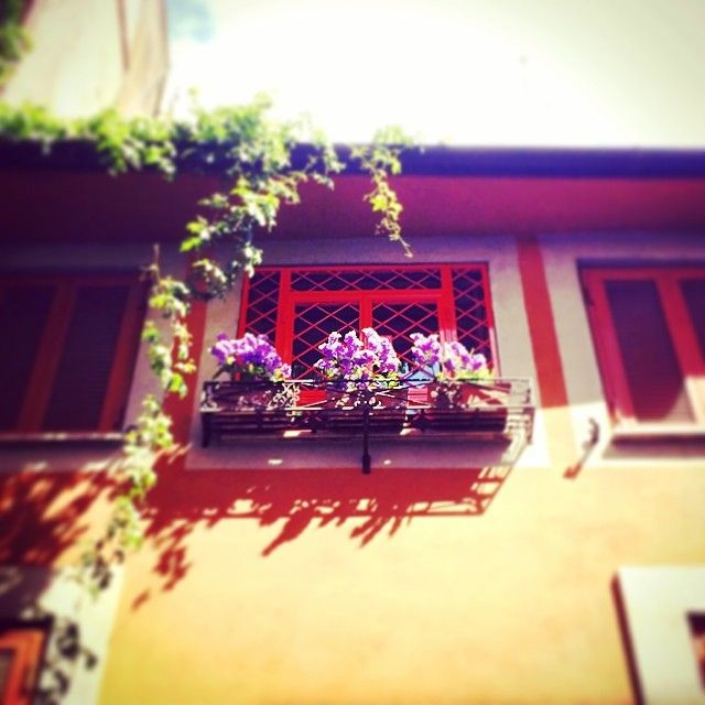 Walking in #trastevere #flowers #fiori #windows #finestre #roma #rome #italy #italia