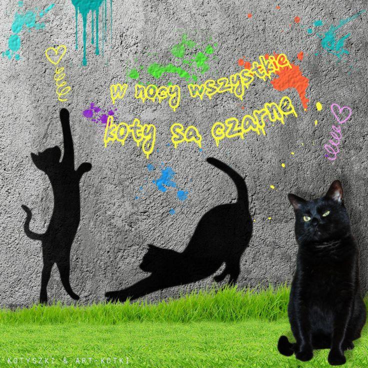 Czarne koty ;-)
