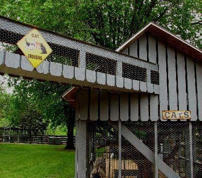 Find Outdoor Cat Enclosures Great Cat Stuff Pinterest