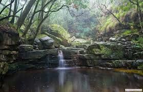 tsitsikamma forest - Google Search