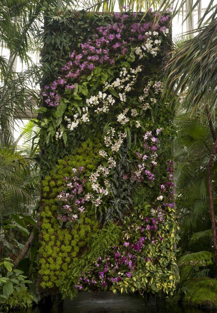 25 Best Orchid Show Ideas On Pinterest Orchid Show 2016