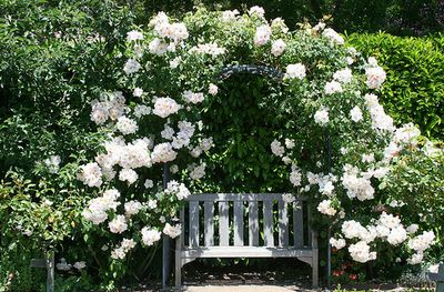 every secret garden needs a place just like thisGardens Ideas, Secret Gardens, Benches, White Rose, Climbing Rose, Rose Arbors, Doors Gardens, Flower, Backyards Gardens