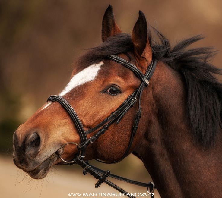 www.martinaburianova.cz Horses - Jumping training