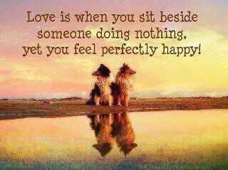 So true!Dogs, Inspiration, Friends, Quotes, Wisdom, So True, Perfect Happy, Living, A Frames