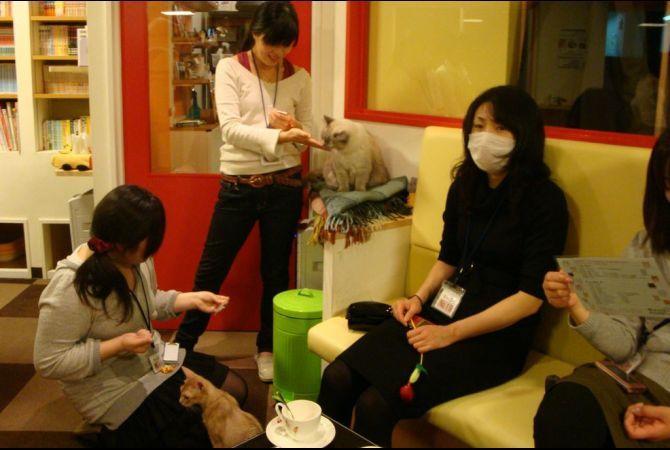 Tokyo Cat Cafes | Calico | GlobalPost