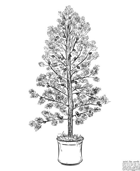 How to draw a pine tree | Step by step Drawing tutorials