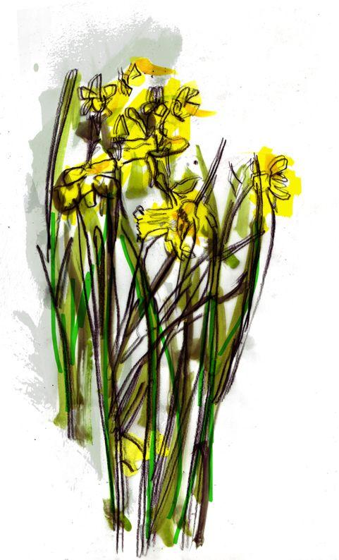 Main Quad daffodils - univ.ox.ac.uk