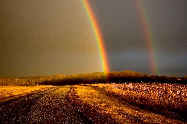 Rainbow(s)