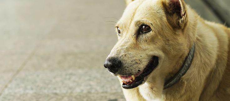 Sapere come comportarsi nel caso in cui si trovino animali abbandonati può essere fondamentale. Sul blog di Bama Pet la nostra veterinaria Cristina ci fornisce indicazioni preziose: leggi l'articolo! #Bamagroup #BamaPet #veterinario #tips
