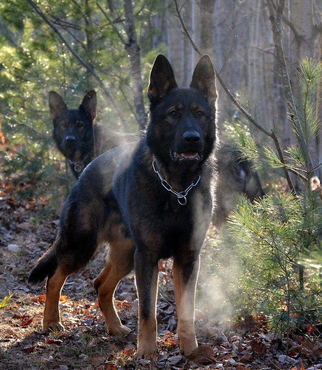 Take Care Of Your Skin With These Simple Steps German Shepherd