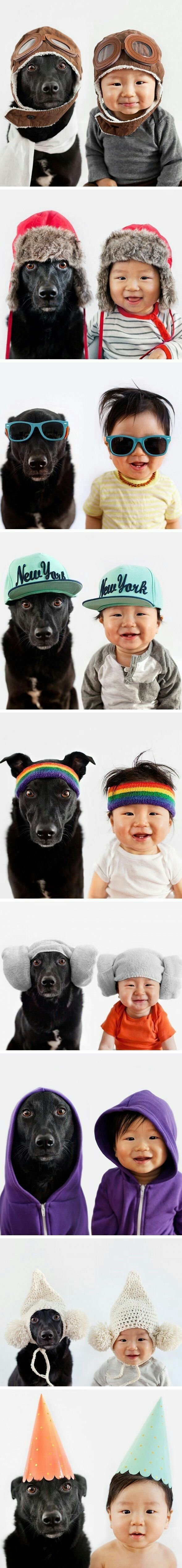 best pampered pets uc images on pinterest doggies cats and dog cat