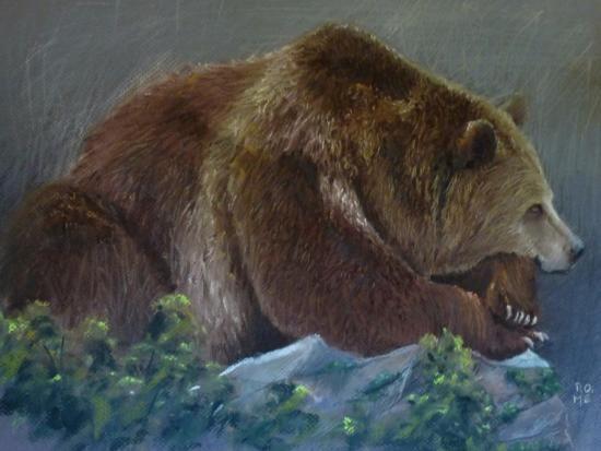 La force tranquille! un ours brun au repos, Pastel 40x50cm