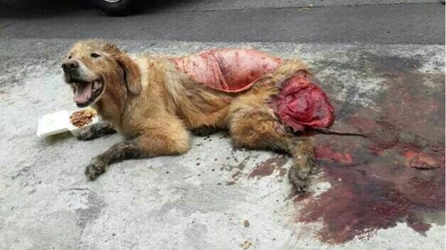 Another poor Baby maimed in Romania!!! This is SO sick!!