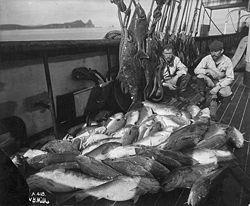 Bateau de pêche d'Alaska avec morue et flétan. http://fr.wikipedia.org/wiki/Morutier