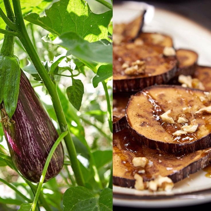 Berenjenas 🍆 en Huerta de Carabaña #carabaña #madrid #foodlover #producto
