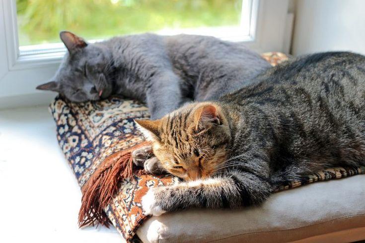 Katzen aneinander gewöhnen – 5 Tipps