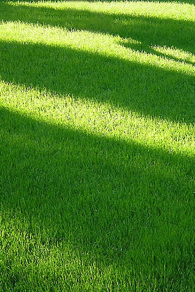 Lawn Shadows on Mowed Grass!  If you need some landscaping done around your house or workplace, call Lawn Tigers Landscaping in Walled Lake, MI at (248) 669-1980 to schedule an appointment TODAY or visit our website www.lawntigers.net for more information!