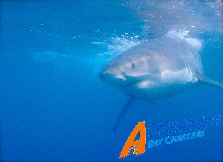 Port Lincoln Shark Cage Diving
