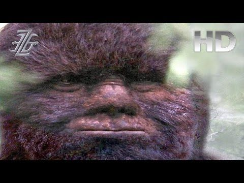 Is Bigfoot Real, What's the Evidence ? [FULL VIDEO] - YouTube