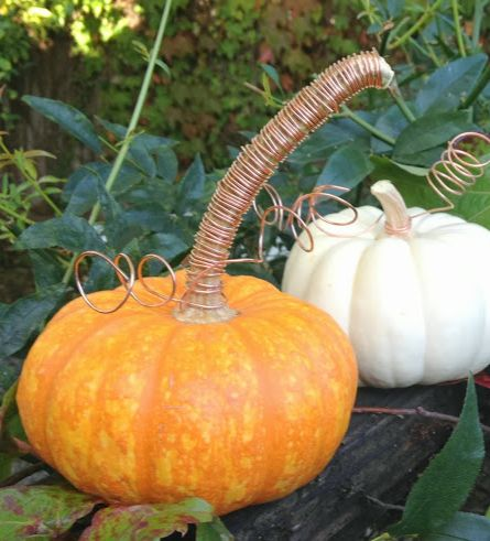 17 best images about pumpkin carving ideas on pinterest for Pumpkin stems for crafts