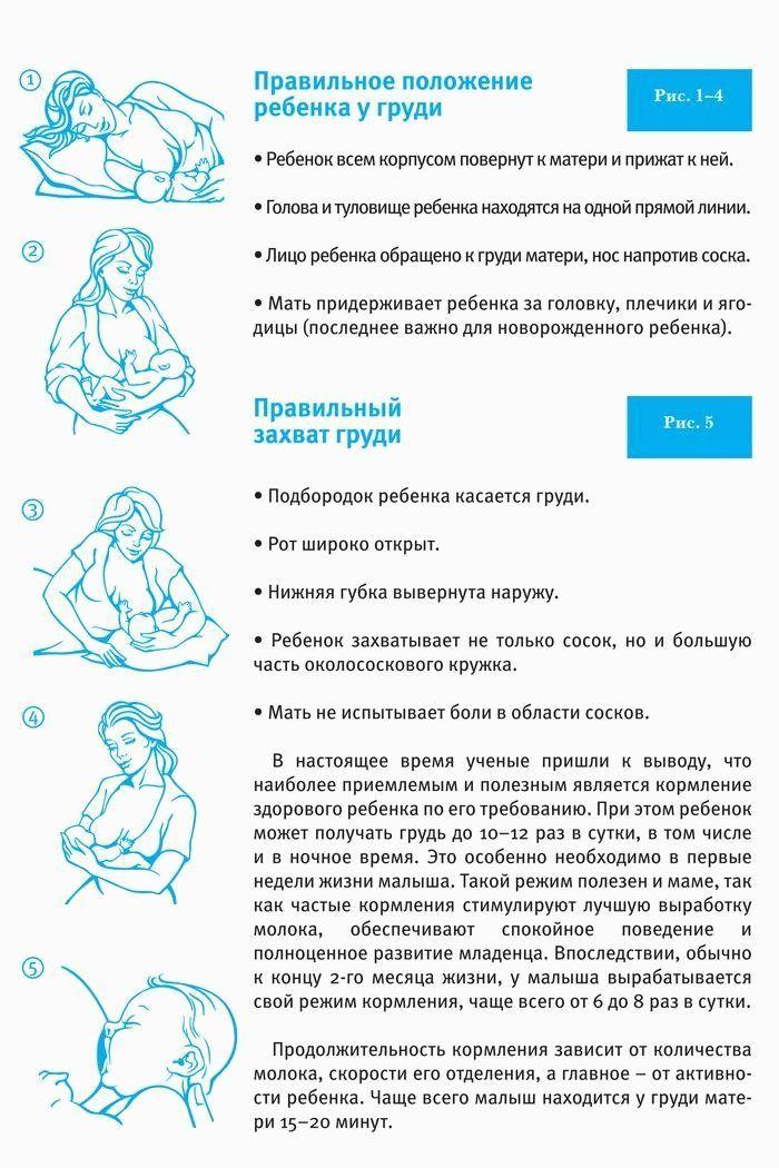Как кормить грудью: основные правила прикладывания к груди (популярные вопросы)