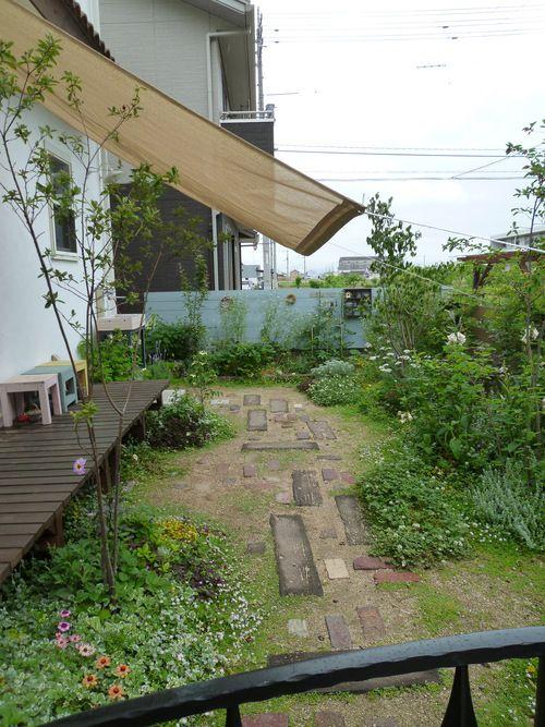 初夏の庭と庭仕事 : violette