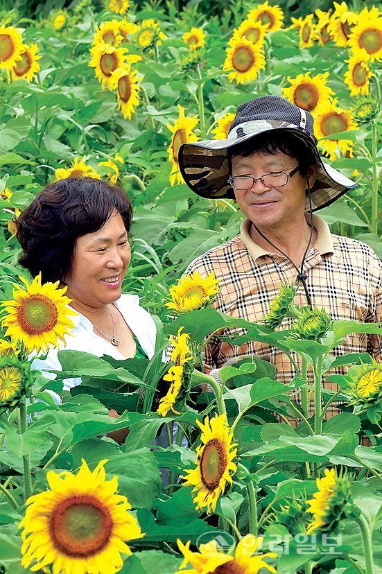 김경숙 해바라기농장