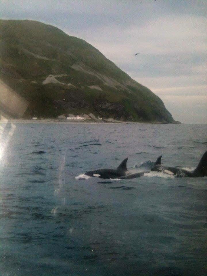 273 Best Ailsa Craig Island Images On Pinterest Scotland