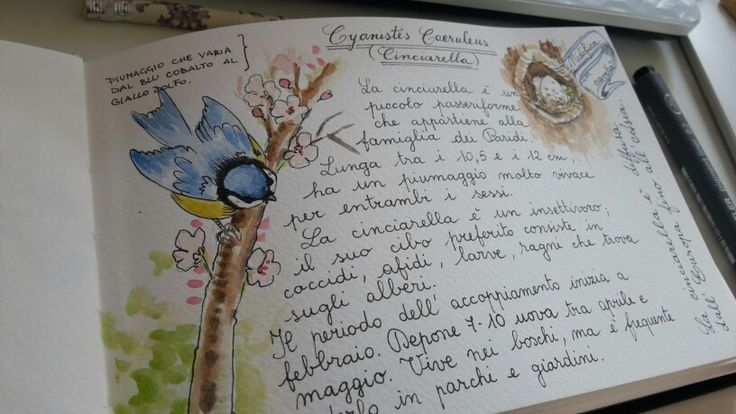 Watercolor naturalistic diary