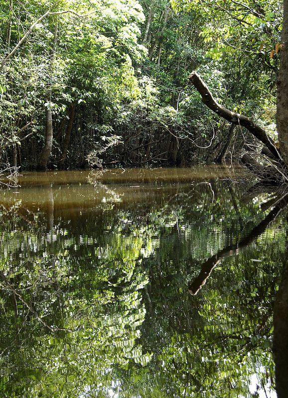 amazon rainforest south america - photo #4