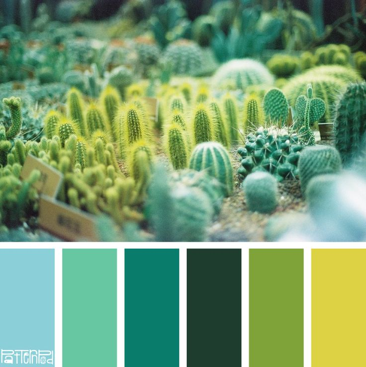 Sprouting Succulent #patternpod #patternpodcolor #color #colorpalettes
