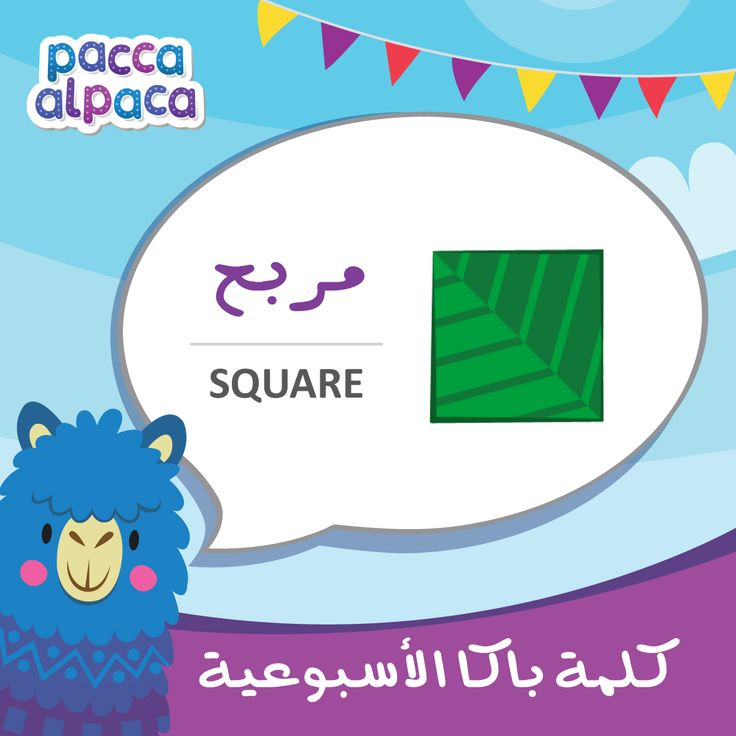 this week Pacca learns how to say square in Arabic!