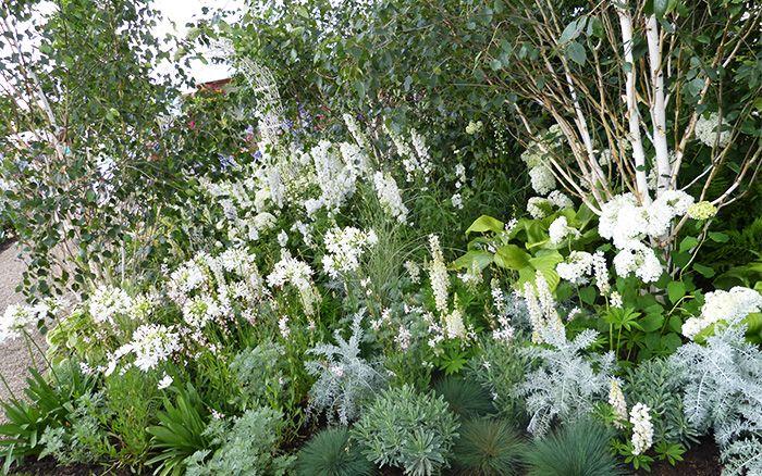 white-garden RHS 50 years in bloom garden at Hampton Court Palace Flower Show 2014