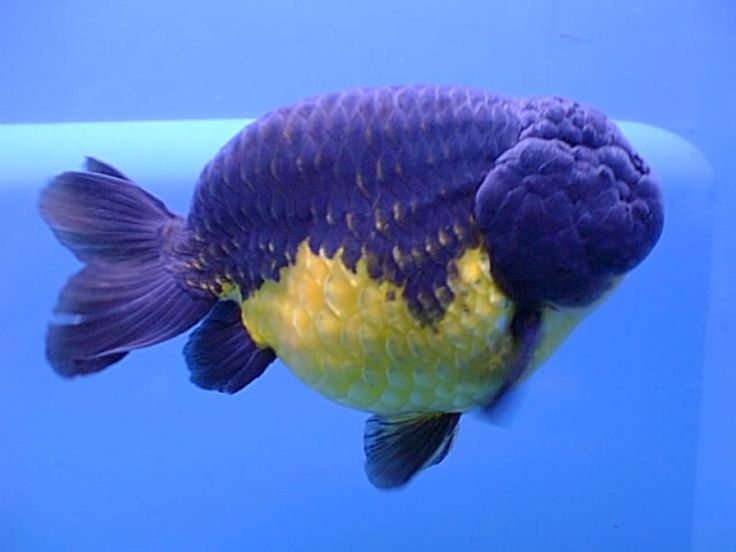 5700 best images about planted aquarium on pinterest for Yellow fish tank water