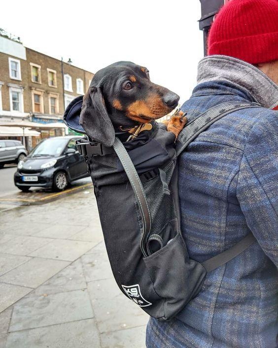 Dachshund Carrier Backpack Dog Carrier Bag Dog Carrier