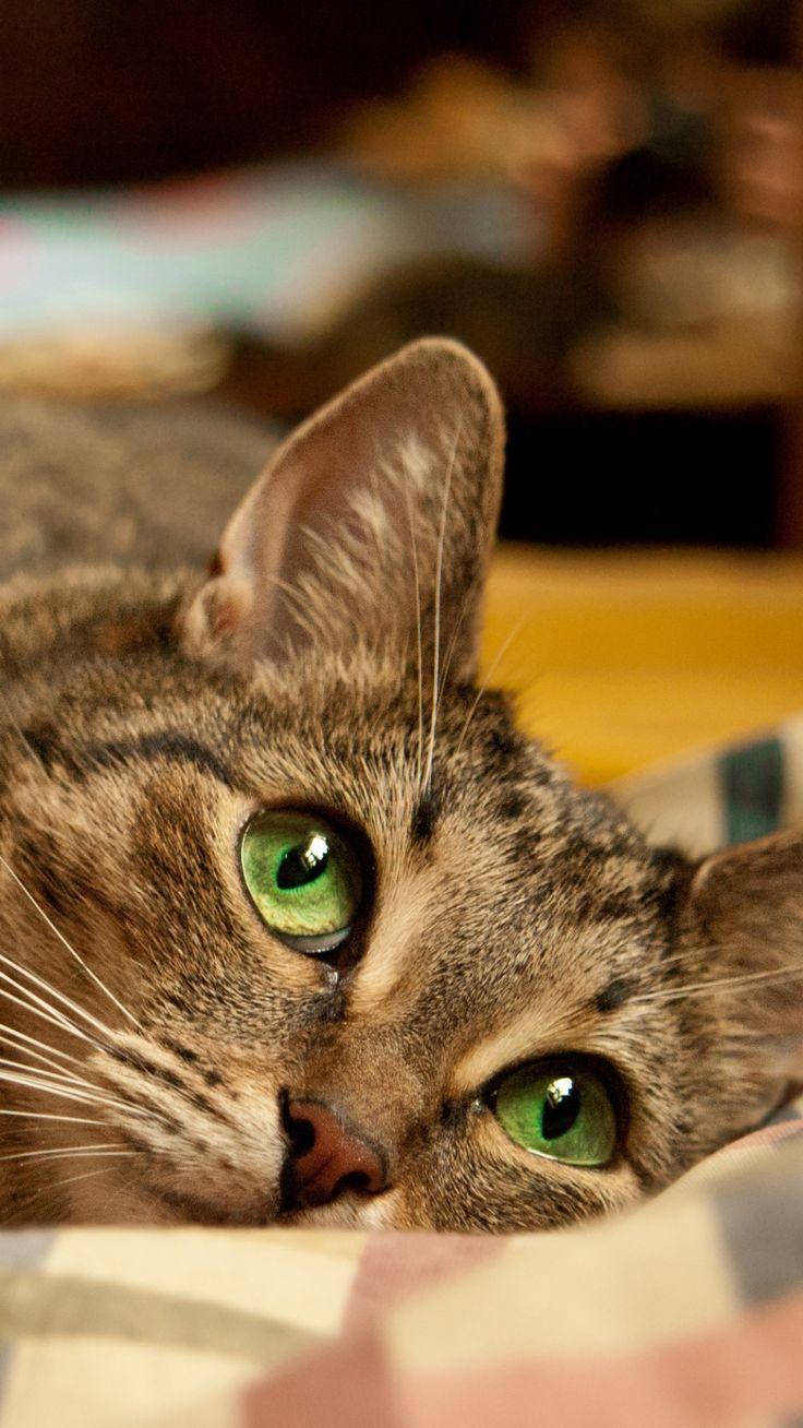 ...Gatinho de olhos verdes.