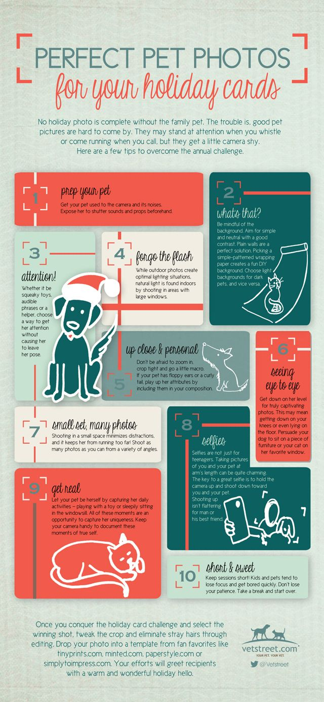 How to Take the Best Dog or Cat Photos for Holiday Cards — Infographic