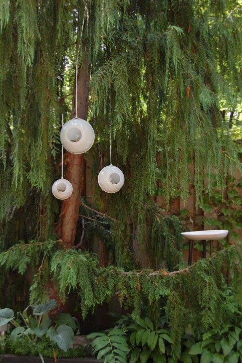 old glass light globes make the coolest bird feeders...why didn't I think of that?