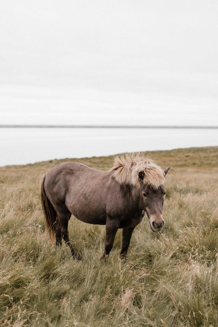 #iceland #wanderlust #horse #travel #adventure