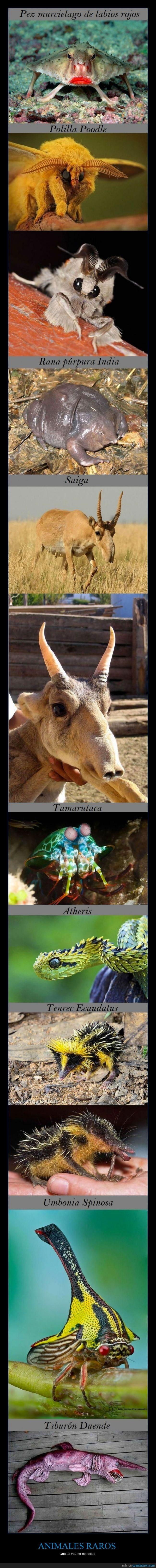 ANIMALES RAROS - Que tal vez no conocías
