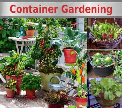 garden container vegetable gardening diy urban vegetables gardens fruit growing apartment