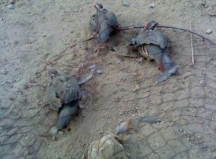 A los cazadores les 'encanta' el silvestrismo