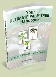 Your Ultimate Palm Tree Handbook