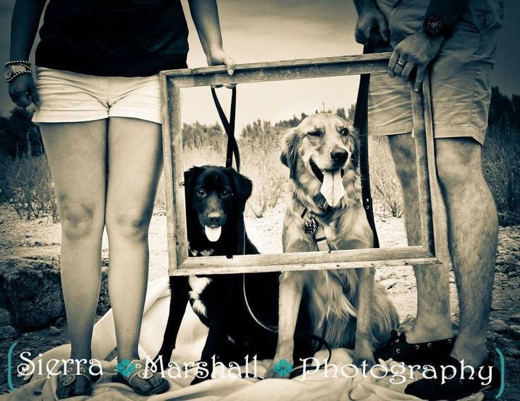 Cute couples with dogs photography   Http://www.sierramarshallphotography.com  http://www.facebook.com/sierramarshallphotography