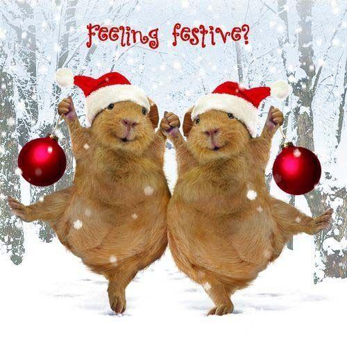 Merry Christmas!!! Love, Anna, elsa, and Olaf