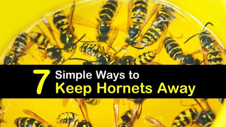 Learn how to get rid of wasps with ease using a homemade