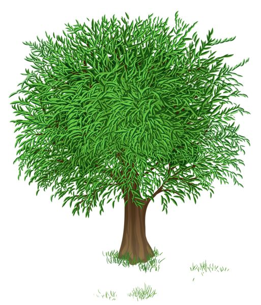 Green Tree Прозрачный PNG изображения Clipart