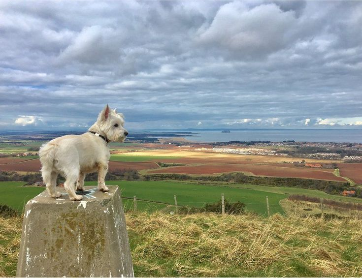 Casper the dog in East Lothian